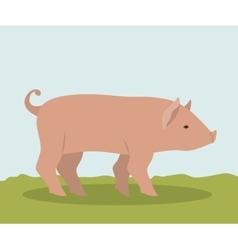 Colorful pork animal design vector
