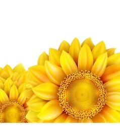 Sunflower isolated on white background EPS 10 vector image