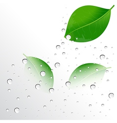 Water drops on the leaves vector