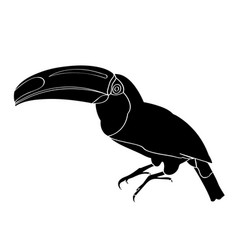 isolated toucan silhouette vector image vector image