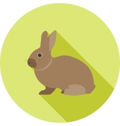 Pet rabbit vector