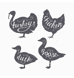 Set of hand drawn hipster style farm birds vector image