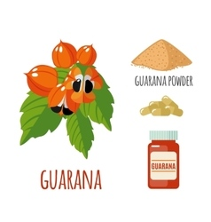 Superfood guarana set in flat style vector
