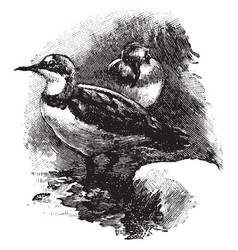 Crook billed plover vintage vector