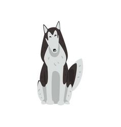 Siberian husky dog character sitting purebred dog vector