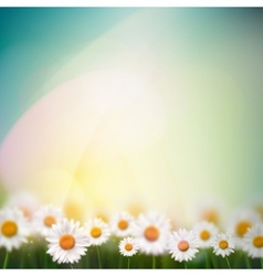 Natural Background with Camomiles vector image