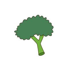 Broccoli food nutrition vitamins health vector