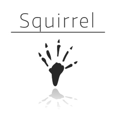 Squirrel animal track vector