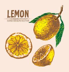 Digital detailed color lemon hand drawn vector