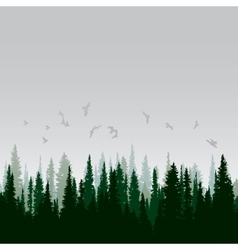 Panorama of wild coniferous forest vector image