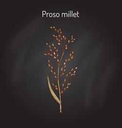 proso millet panicum miliaceum vector image