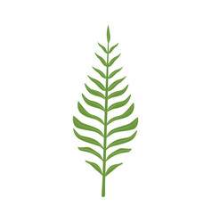 pinnatisect green leaf vector image vector image