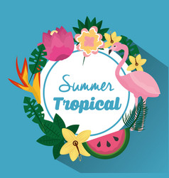 summer tropical beautiful flamengo exotic plants vector image