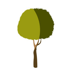 Tree plant foliage stem trunk vector