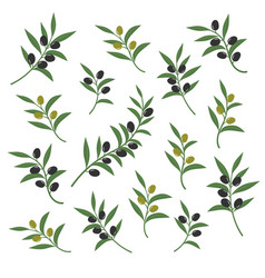 olive branch set italian vector image vector image
