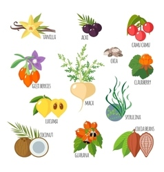 Superfoods in flat style vector image