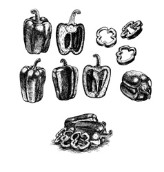 Hand drawn set of bell pepper sketch vector