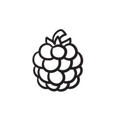 Raspberry sketch icon vector