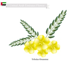 Tribulus omanense the native flower of emirates vector