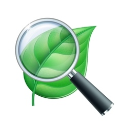 Magnifying glass and leaf vector