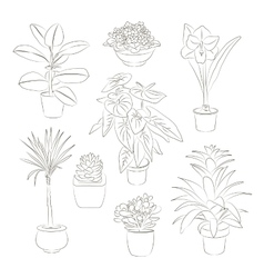 House plants set vector