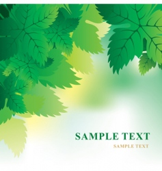 Soft background with grape leaves vector