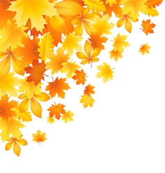 Beautifu l autumn leaves vector image