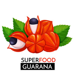 guarana icon vector image vector image