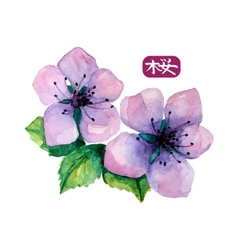 Watercolor elegant flower of japanese sakura vector