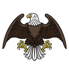 bald eagle spread the wing vector image vector image