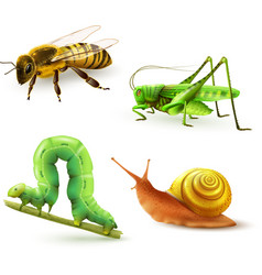 Insects realistic set vector image vector image