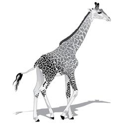 African Giraffe BW vector image