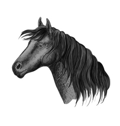Horse head sketch portrait vector image