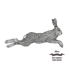 Forest animal jumping hare or rabbit hand drawn vector