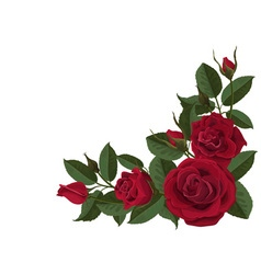 Red roses buds and green leaves vector