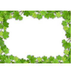 frame from the green maple leaves vector image