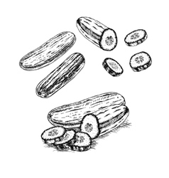 Hand drawn set of cucumber sketch vector image vector image