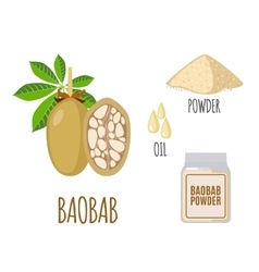 Superfood baobab set in flat style vector