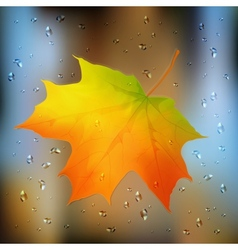 Autumn orange leaf on wet glass vector