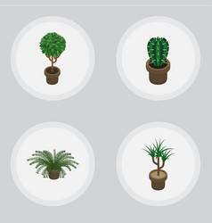 Isometric flower set of tree peyote houseplant vector