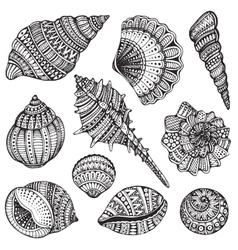 Set of hand drawn ornate seashells vector image