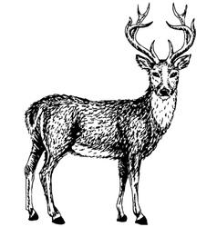 Wild deer vector