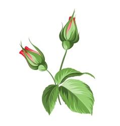 Hand drawn rose vector image