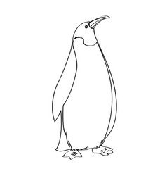 isolated penguin outline vector image vector image