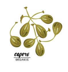 Cartoon capers ripe green vegetable vegetarian vector