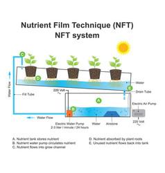 nutrient film technique is a hydroponic technique vector image