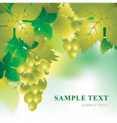 Soft background with grape vector