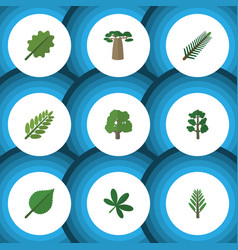 Flat icon bio set of spruce leaves forest vector