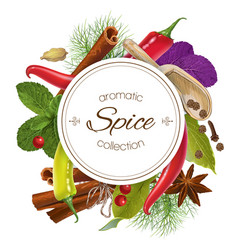 Spice round banner vector image vector image