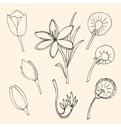 Set of Flower isolated vector image